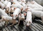 """Rosja wstrzyma�a import zwierz�t z UE, Unia ��da zniesienia zakazu. """"Dla Polski to bez znaczenia"""""""