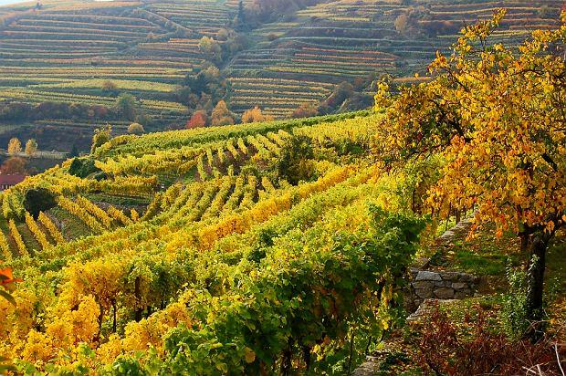 Enoturystyka - podr�e szlakiem wina