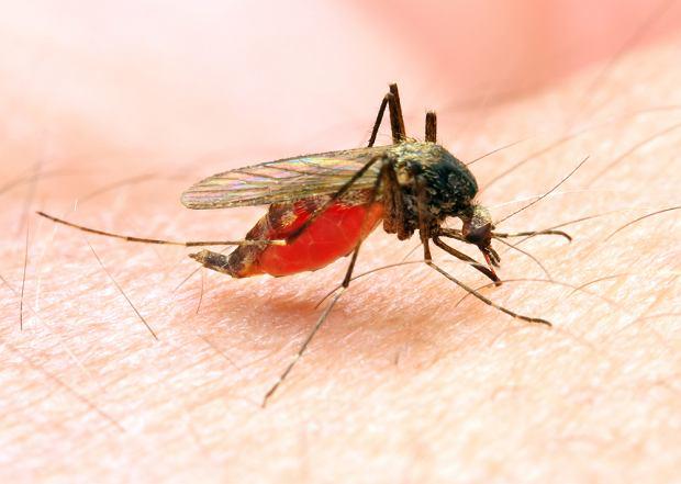 Komary, osy, pszczoły i żmije  - czym nam grozi ich atak