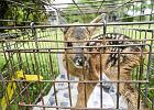 Ludzie o dobrych sercach zabijaj� dzikie zwierz�ta
