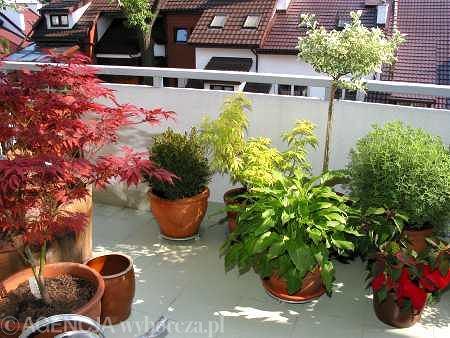 Zimą na balkonie najładniej wyglądają iglaki i zimozielone krzewy liściaste, a także byliny, które nie tracą liści. Puste miejsca w skrzynkach warto uzupełnić gałązkami jedliny lub krzewów o dekoracyjnych owocach, takich jak irga bądź ostrokrzew.