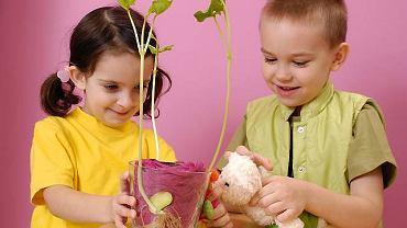 Dzięki prostemu doświadczeniu z kiełkującą fasolą dzieci w zabawie poznają różne części roślin.