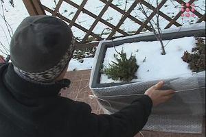 Os�anianie donic przed zim�