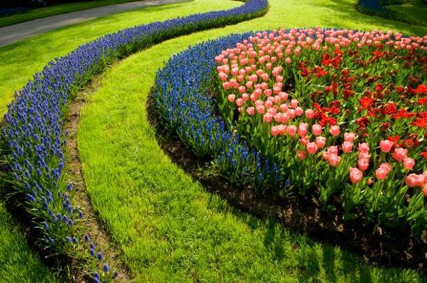 Niedaleko miejscowo�ci Lisse w Po�udniowej Holandii znajduj� si� przepi�kne, s�ynne Ogrody Keukenhof. Morze kwiat�w: tulipan�w, �onkili i narcyz�w u�wiadamia nam, �e wiosna nadesz�a ju� w pe�ni. Co roku w ogrodzie jest sadzonych ponad siedem milion�w cebulek kwiatowych, kt�re rozkwitaj�c tworz� niesamowity kolorowy dywan. Wszystkie kwiaty, kt�re przypadn� nam szczeg�lnie do gustu mo�emy oczywi�cie kupi� na miejscu. Ogrody Keukenhof zapraszaj�!