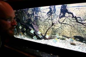 W zoo nowa atrakcja - estuarium. Co to jest?