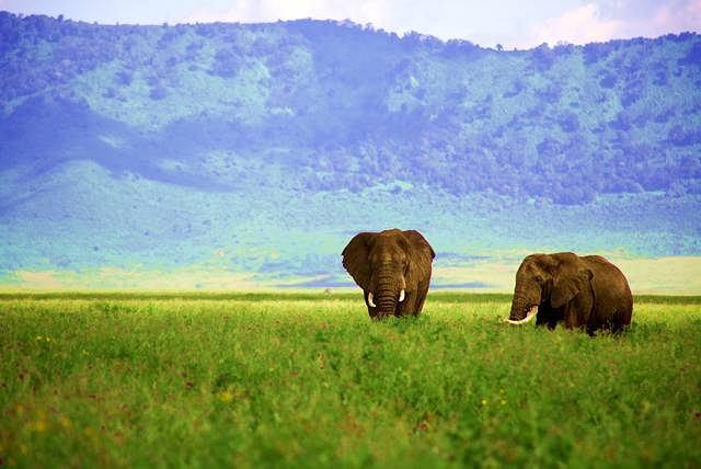 Słonie w tanzańskim kraterze Ngorongoro