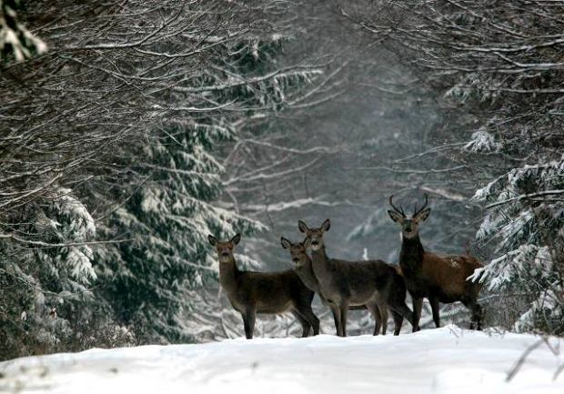 Podglądanie zwierząt leśnych (Fot. Adam Wajrak)