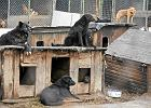 Nielegalne psy z Celestynowa. Kto je teraz przygarnie?
