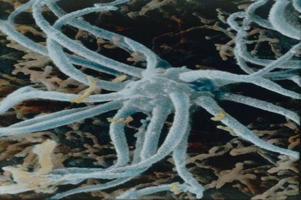 Receptory (komórki zmysłowe, komórki receptorowe) - budowa i funkcje