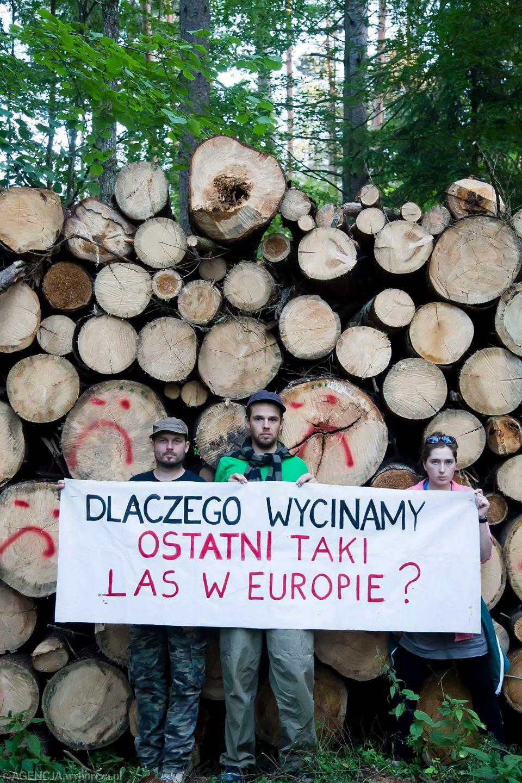 Protest przeciwko wycince drzew w puszczy białowieskiej, okolice Narewki, 8 sierpnia 2017.