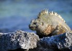 Galapagos. Wyspy ewolucji