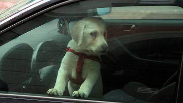 Warszawa. Pies zamknięty w samochodzie