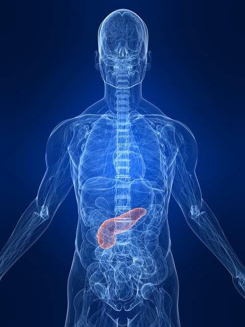 Wydzielane przez trzustkę enzymy uczestniczą w m.in. rozkładzie białek, tłuszczów oraz węglowodanów