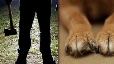 Weterynarz stwierdził, że psy zabito ostrym narzędziem