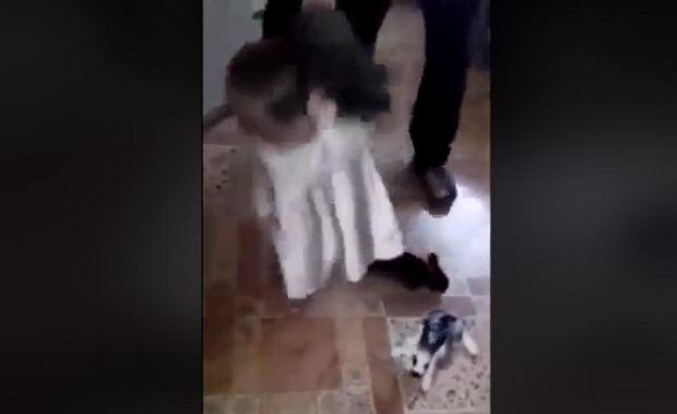 Mała dziewczynka rzuca królikami o podłogę. Dorośli się przyglądają. Bulwersujący film. Jest interwencja