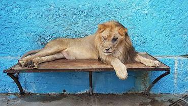 Safari Park Zoo w Fier