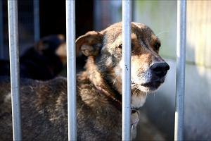 Psy ze schroniska w Częstochowie szukały w Alejach nowych opiekunów