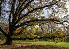 Oto najpi�kniejsze, polskie drzewa. I ich niezwyk�e historie
