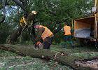 Wycinaj� tu setki drzew, a prezydent... posadzi tu d�b
