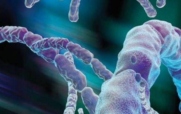 Bacillus anthracis, czyli laseczki wąglika