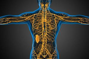 Rusza akcja sprawdzania dro�no�ci kana��w limfatycznych - zbadaj bezp�atnie dro�no�� kana��w limfatycznych