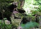 Dr Tomasz Samojlik: Puszcza pamiętająca czasy Jagiełły jest traktowana jak nic nieznaczący las