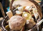 Zebrałeś i co dalej? Jak najlepiej wykorzystać w kuchni najpopularniejsze gatunki grzybów? [PORADNIK]
