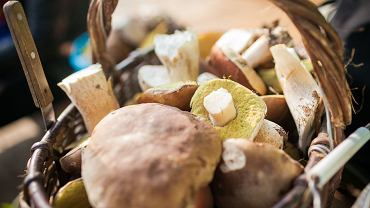 Zebrałeś i co dalej? Co można zrobić z najpopularniejszych gatunków grzybów? [PORADNIK]