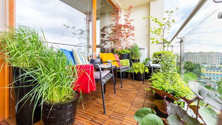 Balkon wygląda jak mały ogród. Pełno tu zieleni, która uprzyjemnia relaks.
