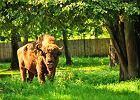 �ubr w Bia�owieskim Parku Narodowym