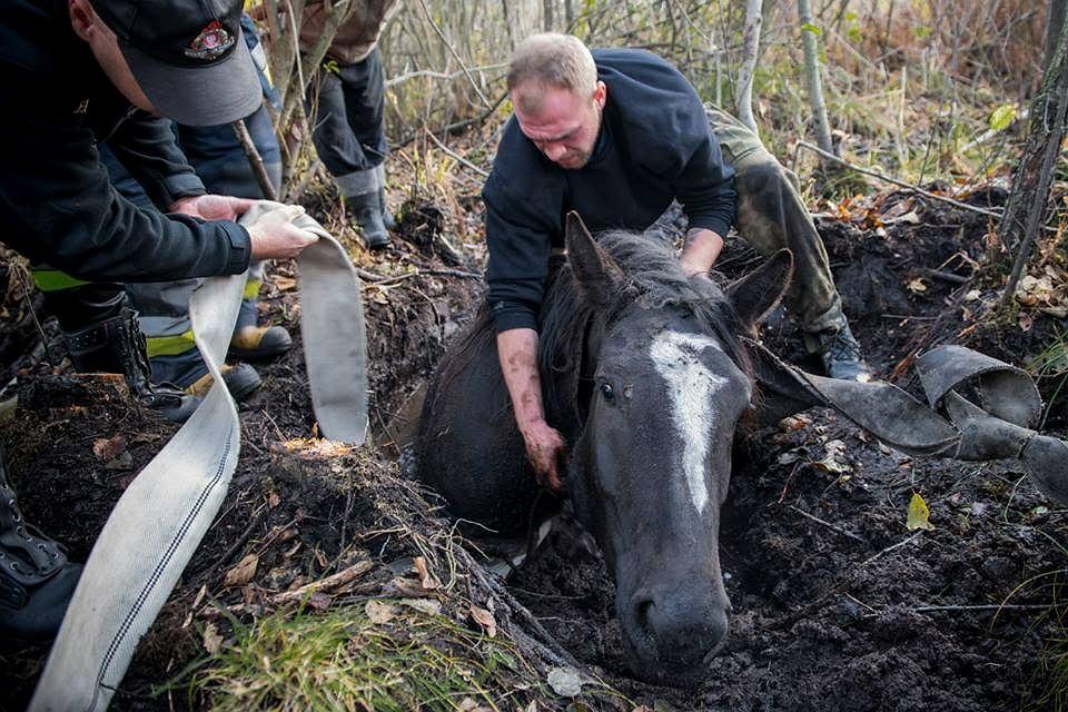 Po kilku godzinach udało się uratować konia, który wpadł do trzęsawiska
