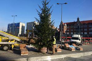 Świąteczne choinki stanęły zamiast palm na rynku w Katowicach [ZDJĘCIA]
