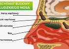 Budowa nosa. Z czego zbudowany jest nos, jak działa i jakie pełni funkcje?