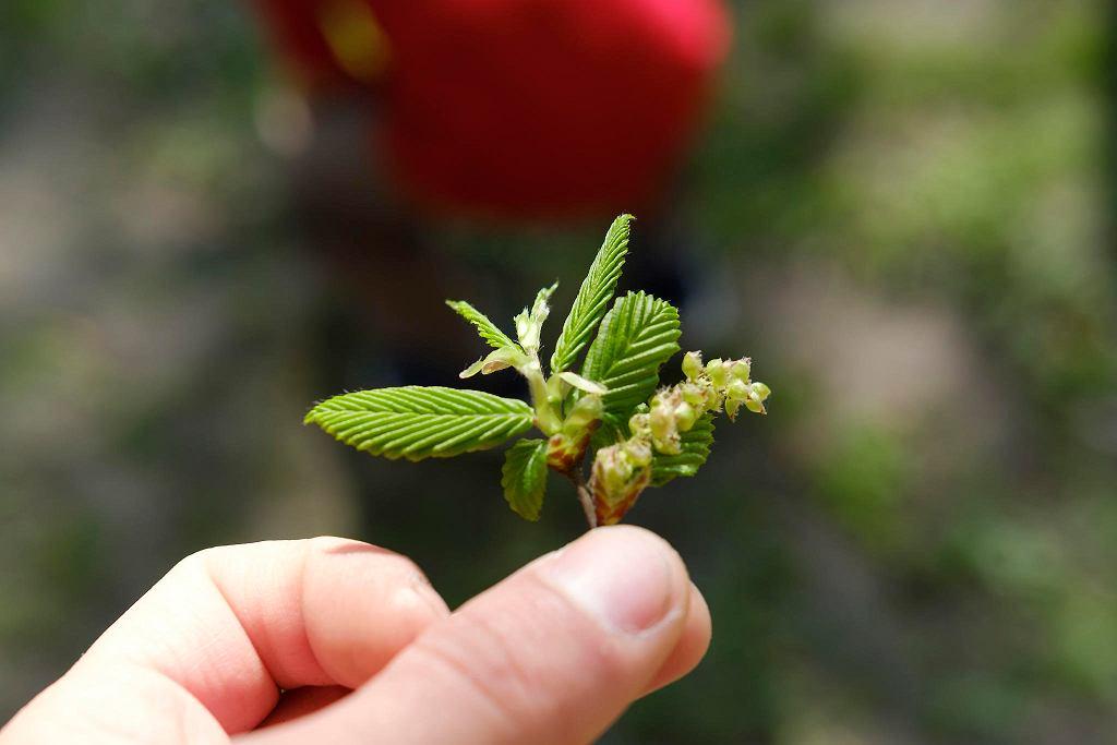 Warsztaty Obserwacje terenowe Kwiaty i owoce drzew w ramach programu społecznego Ogród Miejski Jazdów / BARTOSZ GÓRKA