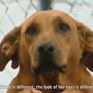 Dobrze wiemy, �e psy s� lojalne i oddane. Ale ta historia chwyta za serce