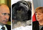Władimir Putin, Angela Merkel i czarny labrador