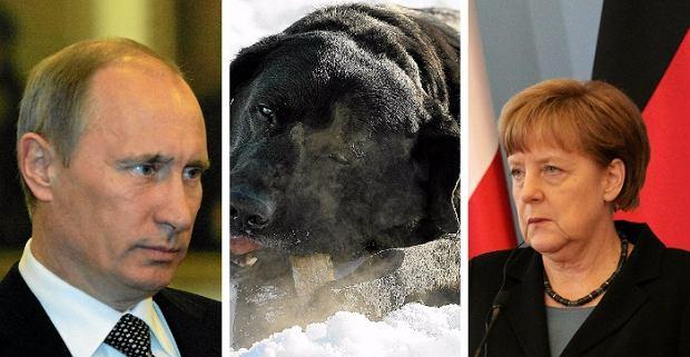 Putin, Merkel i pies. Przywódca Rosji tłumaczy się z dyplomatycznej wpadki sprzed lat