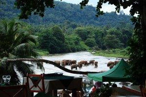 Sri Lanka. Piękna wyspa miłych ludzi [SRI LANKA EXTRA]