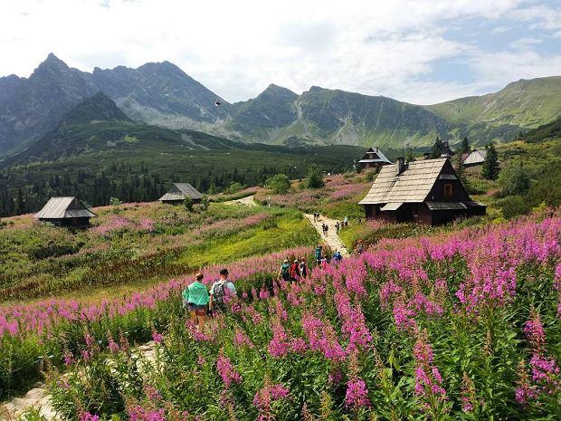 """Tatry zalało fioletowe morze. Turyści: """"Cudowny widok!"""", """"Ooo matko!"""". Dzielą się swoimi zdjęciami"""