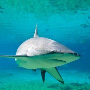 Wi�cej ludzi ginie robi�c selfie, ni� w wyniku ataku rekina