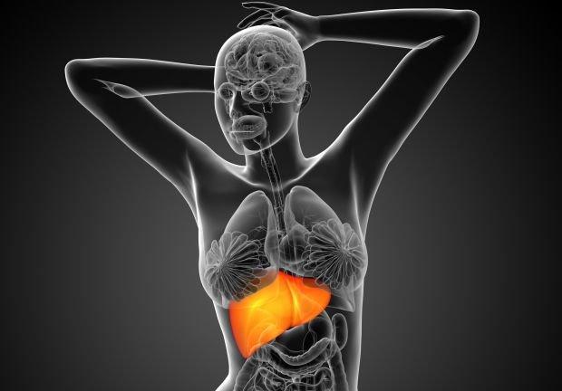 Wątroba zwykle sama się regeneruje, gdy popełniasz klasyczne błędy dietetyczne. Bezsilna bywa wobec wirusów i toksyn