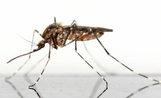 Sposoby na komary w domu - będziesz spać spokojnie