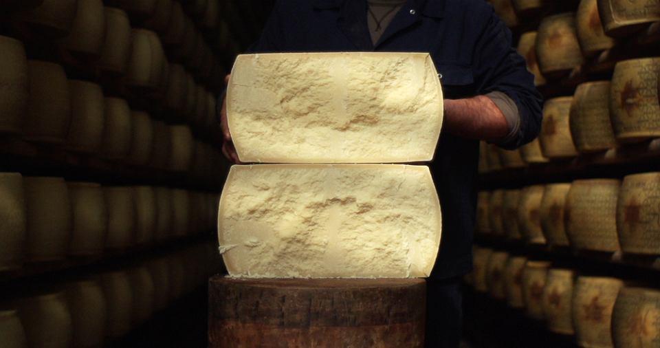 Krowy hodowane na potrzeby produkcji serów we Włoszech żyją w fatalnych warunkach