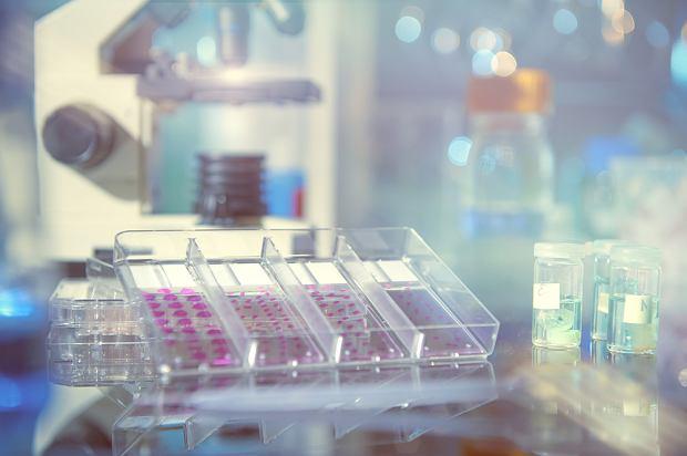 Badanie histopatologiczne - na czym polega histopatologia, jakie są jej rodzaje i przebieg badania?