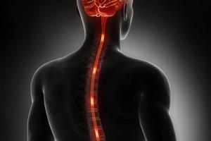 Worek oponowy (opony mózgowo-rdzeniowe, opony rdzenia kręgowego)