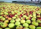 Chińczycy kupią polskie jabłka