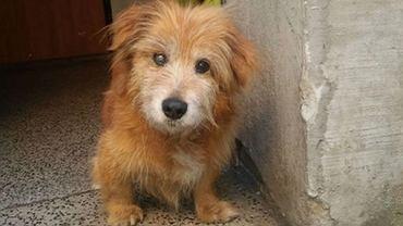 Pies uratowany przez policję