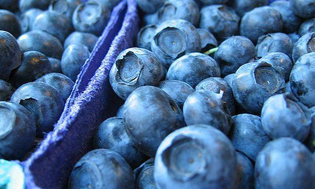 Голубика высокорослая: здоровая сладость