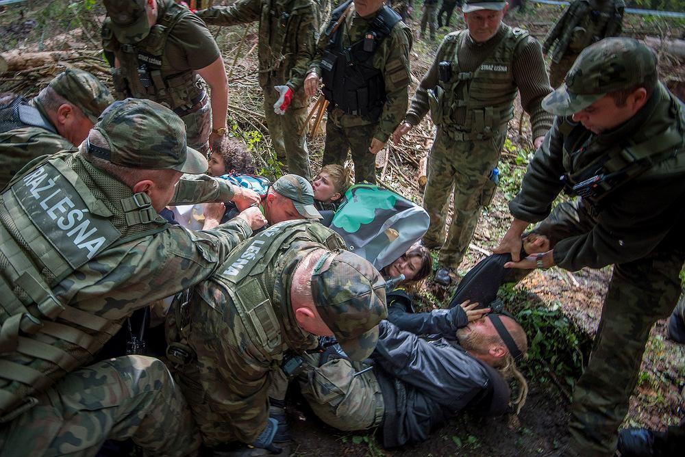 Interwencja Straży Leśnej podczas blokady wycinki przeprowadzonej przez Obóz dla Puszczy (13 września 2017, Puszcza Białowieska, nadleśnictwo Białowieża)