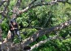 Ludzie na drzewie